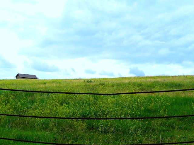 Grass_fence